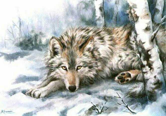 Волк: предпросмотр